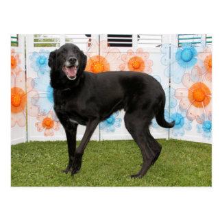 Cartão Postal Walter - Labrador preto X