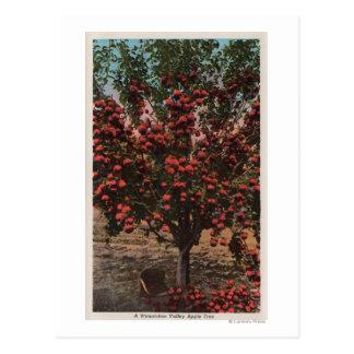 Cartão Postal Wenatchee, árvore de Apple do vale de WAA