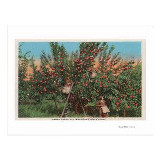 Cartão Postal Wenatchee, WAView do pomar de Apple & dos