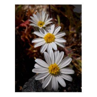 Cartão Postal Wildflowers da estrela do deserto