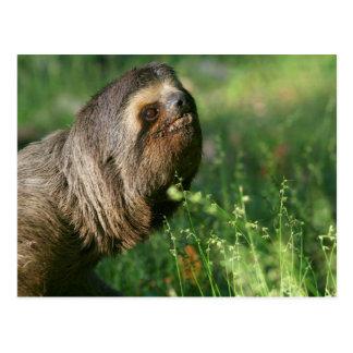 Cartão preguiçoso da preguiça