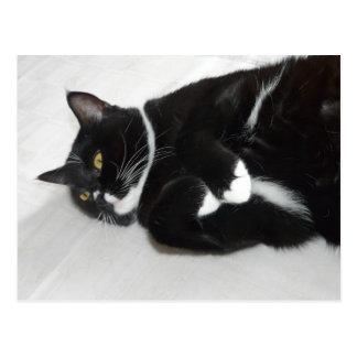 Cartão preguiçoso do gato do smoking