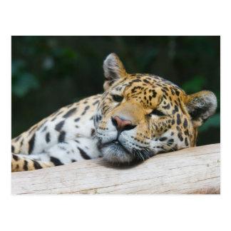 Cartão preguiçoso do leopardo