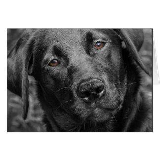Cartão preto de Labrador