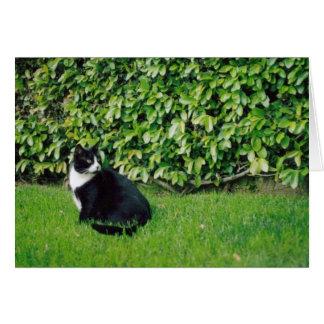 Cartão preto e branco do gato