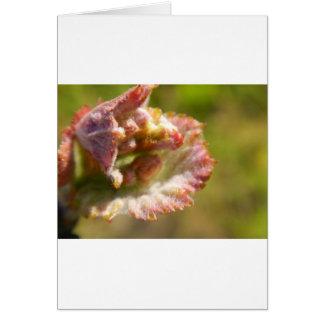 Cartão Primeiros botões - uvas