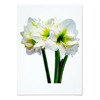 Cartão Princesa verde do Amaryllis