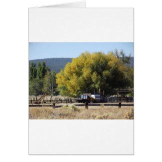 Cartão Rancho na queda