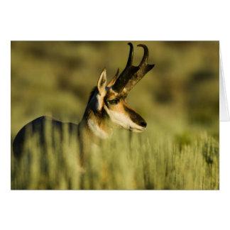 Cartão Refúgio nacional do antílope da montanha do cervo,