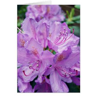 Cartão Rododendro malva