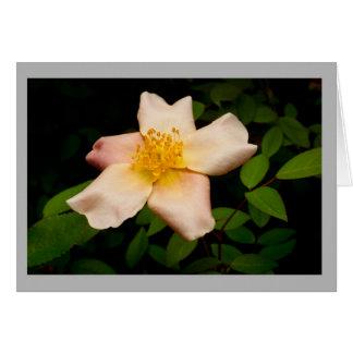 Cartão Rosa amarelo no jardim da primavera