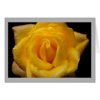 Cartão Rosa amarelo no jardim da primavera com gotas de