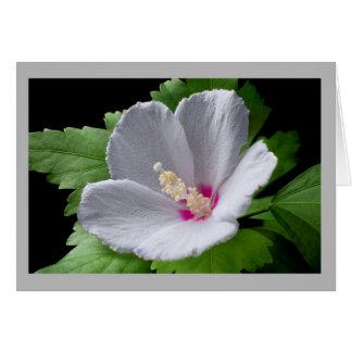 Cartão Rosa branco da flor 4 da flor de Sharon