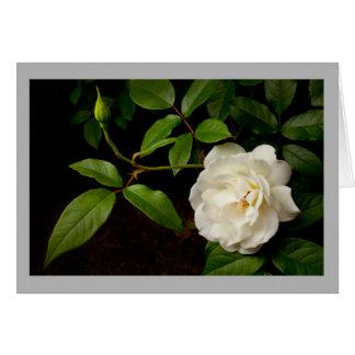 Cartão Rosa branco dos namorados 33 com roseoud