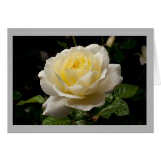 Cartão Rosa branco dos namorados 36