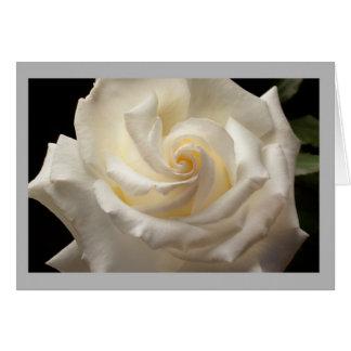 Cartão Rosa branco puro no jardim da primavera