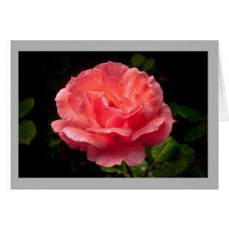 Cartão Rosa vermelha 20