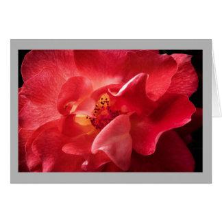 Cartão Rosa vermelha de incandescência dos namorados 45