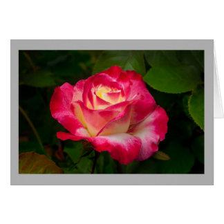 Cartão Rosa vermelha dos namorados 19