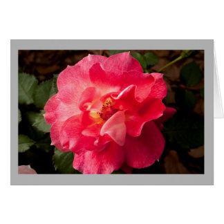Cartão Rosa vermelha no jardim da primavera