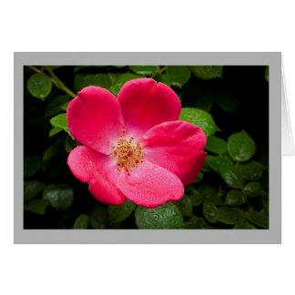 Cartão Rosa vermelha no jardim da primavera com gotas de