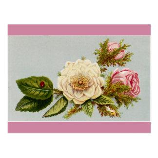 Cartão - rosas do joaninha cartão postal