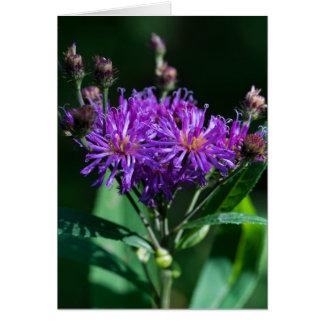Cartão roxo do Wildflower do Ironweed apalaches