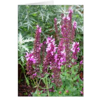Cartão Salvia cor-de-rosa