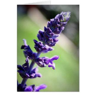 Cartão Salvia roxo de florescência