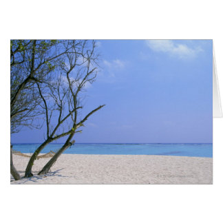 Cartão Sandy Beach 9