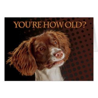 Cartão Spaniel de Springer de Brown e de creme, você é