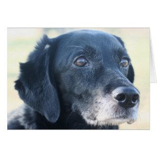 Cartão TESS - Labrador preto Photo-3