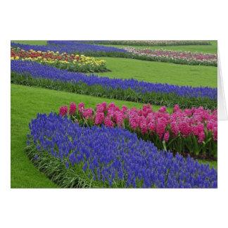 Cartão Teste padrão do jacinto de uva, tulipas, e