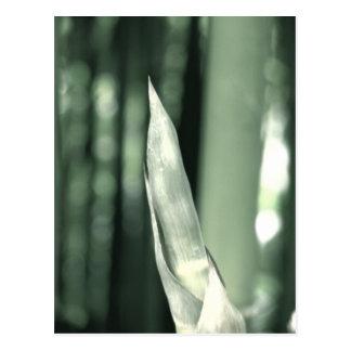 Cartão - tiro de bambu