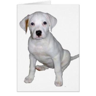 Cartão Tyson ainda um filhote de cachorro