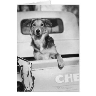 Cartão Um cão em um carro
