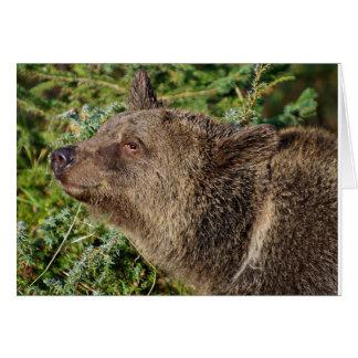Cartão Um urso de urso de sorriso