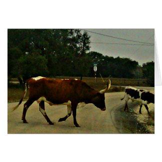 Cartão Uma vaca longa bonita do chifre que cruza a