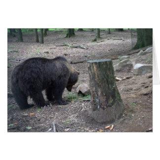 Cartão Urso de Brown