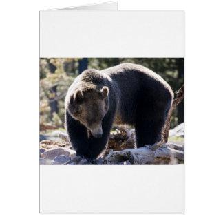Cartão Urso de urso