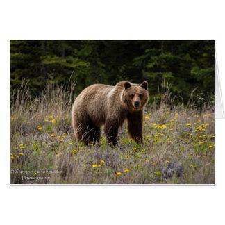 Cartão Urso de urso - Alaska