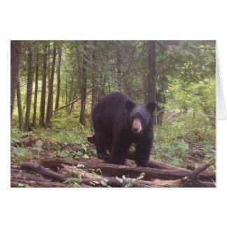Cartão Urso preto