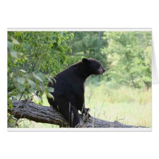Cartão urso preto que senta-se na árvore