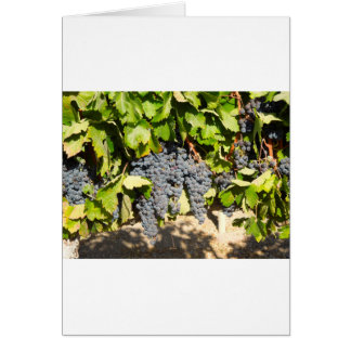 Cartão Uvas de Napa