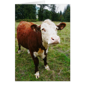 Cartão Vaca de carne enfrentada branca