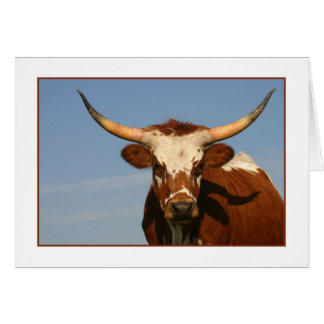 Cartão Vaca de Texas Longhorn