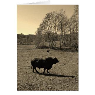 Cartão Vaca, touro preto. Foto do tom do Sepia