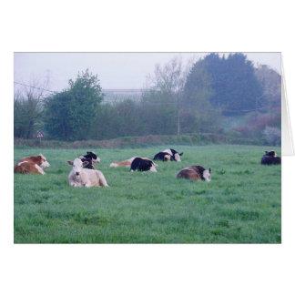 Cartão - vacas na cor