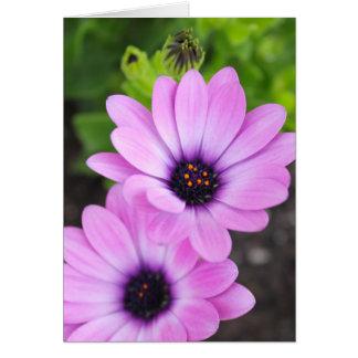 Cartão Vazio Notecard da flor da margarida africana