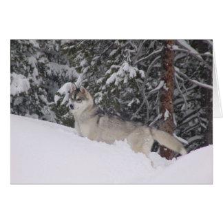 Cartão Vazio Notecards do rouco Siberian